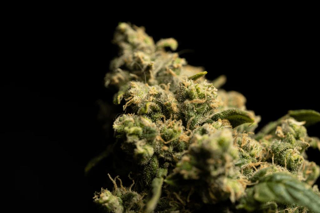 nug of weed